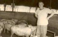 חזיר בפסטיבל חיפה